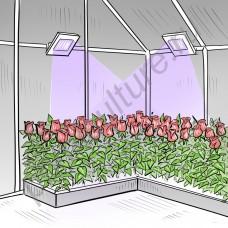 """Прожектор с ультрафиолетовым свечением """"Киссин УФ"""" 50Вт"""