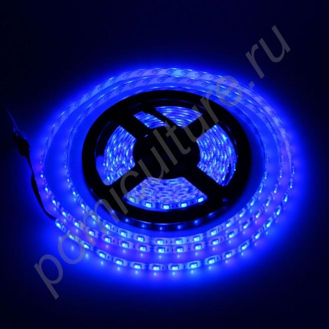 Светодиодная лента синего цвета SMD5050 для использования в биколорных светильниках